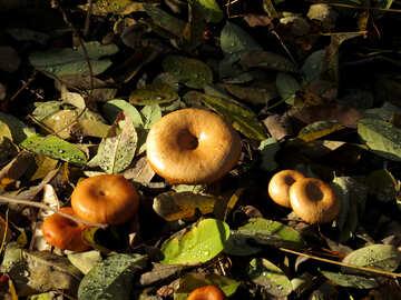 Autumn mushrooms №24883