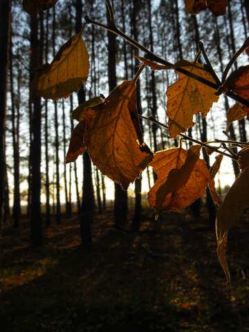 Autumn Nature №24757