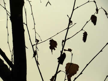 Autumn shadows №24782