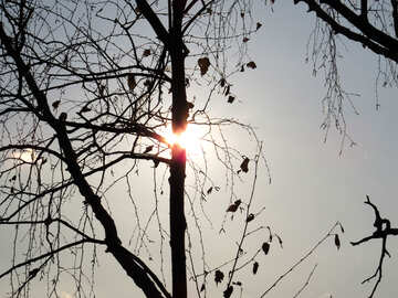 Cold Sun №24787