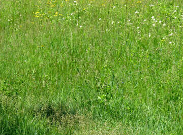 Lawn texture №24982