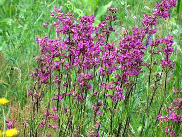 Wildflowers №24928