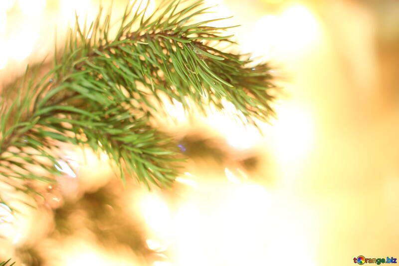 Desktop background on Christmas tree branch №24594