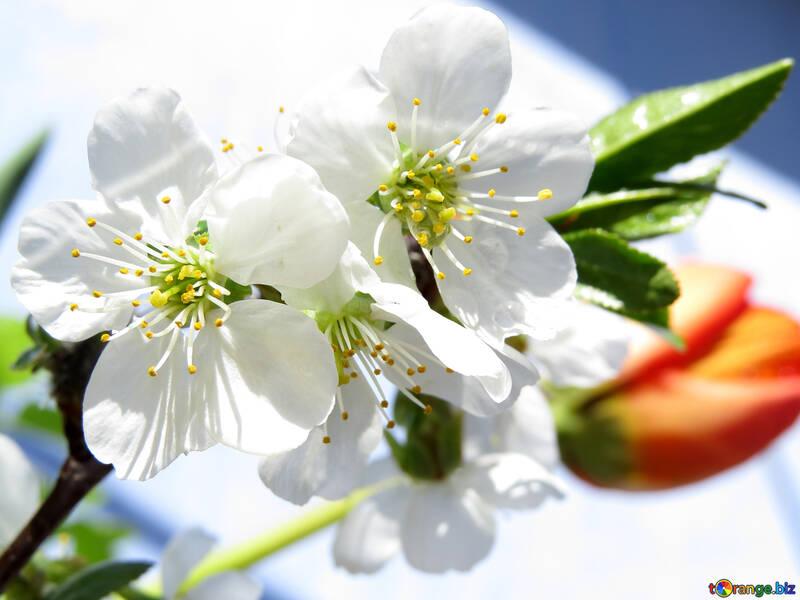 Fondo de primavera en escritorio №24050