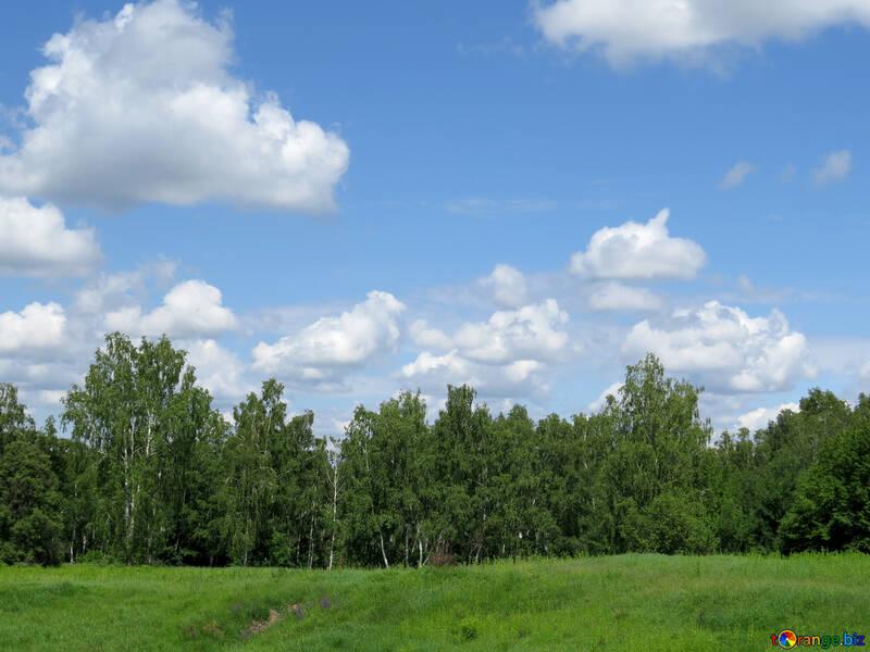 Desktop wallpaper on forest and sky №24733