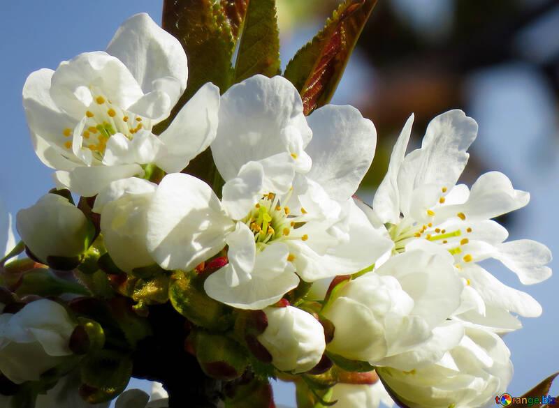 Spring flower on the desktop №24413