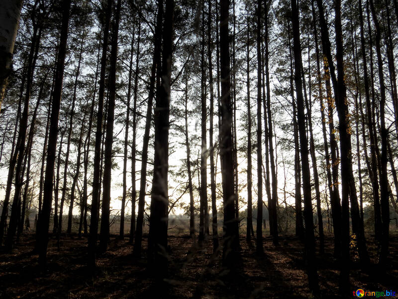 Borde del bosque №24759