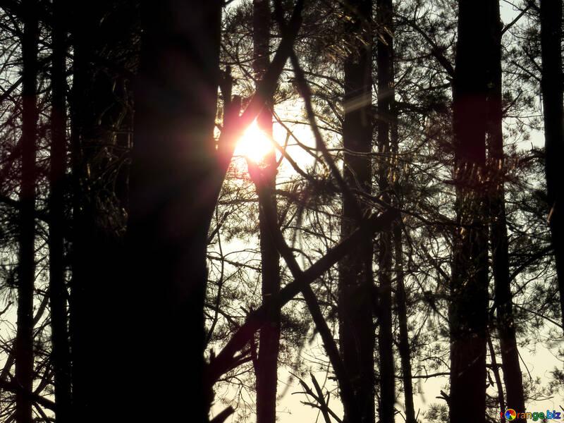Noche en el bosque №24768