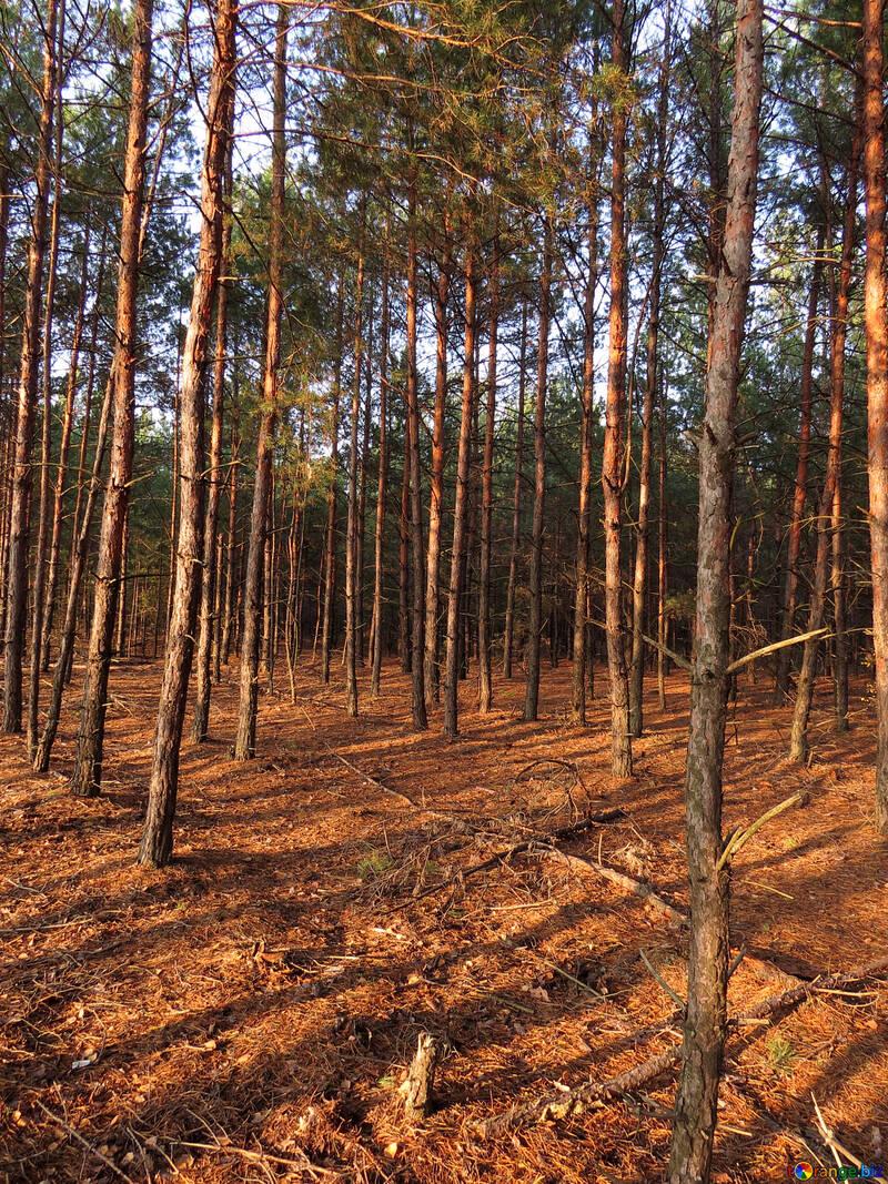 Солнечный свет в осеннем лесу №24796