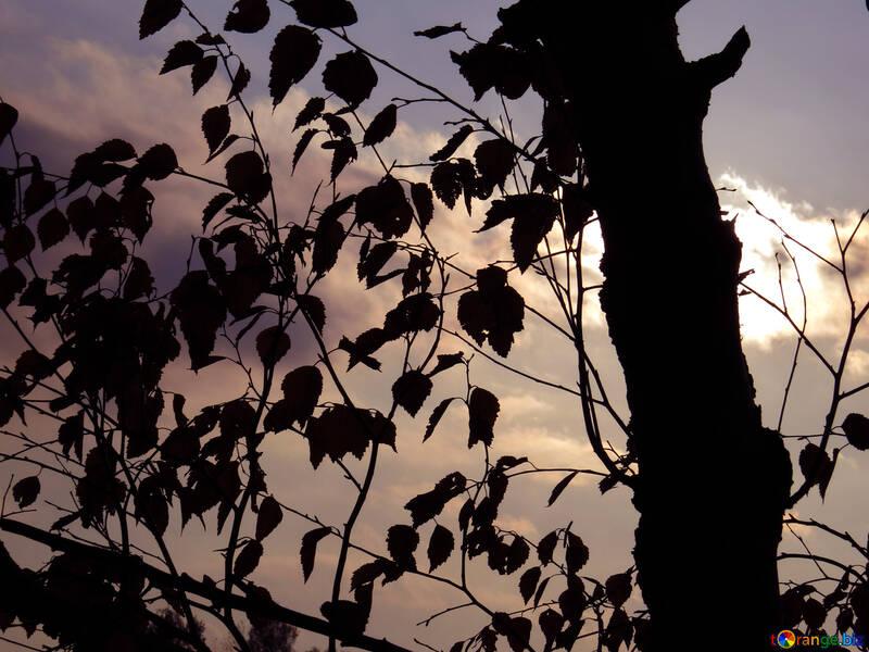 Coucher de soleil dans la forêt d`automne №24804