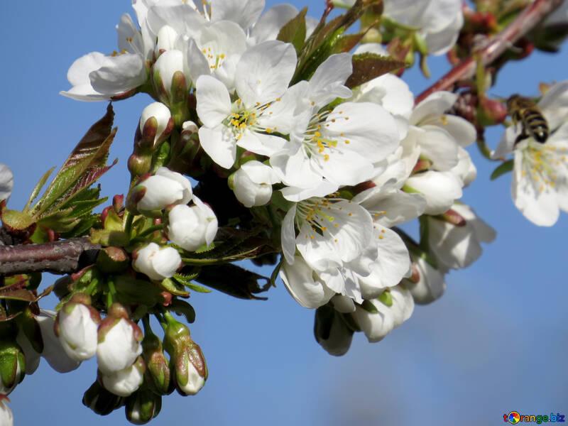 Hermosa y delicada flor №24447