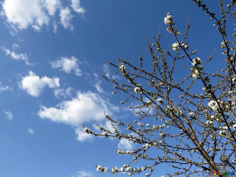 Ранняя весна №24407