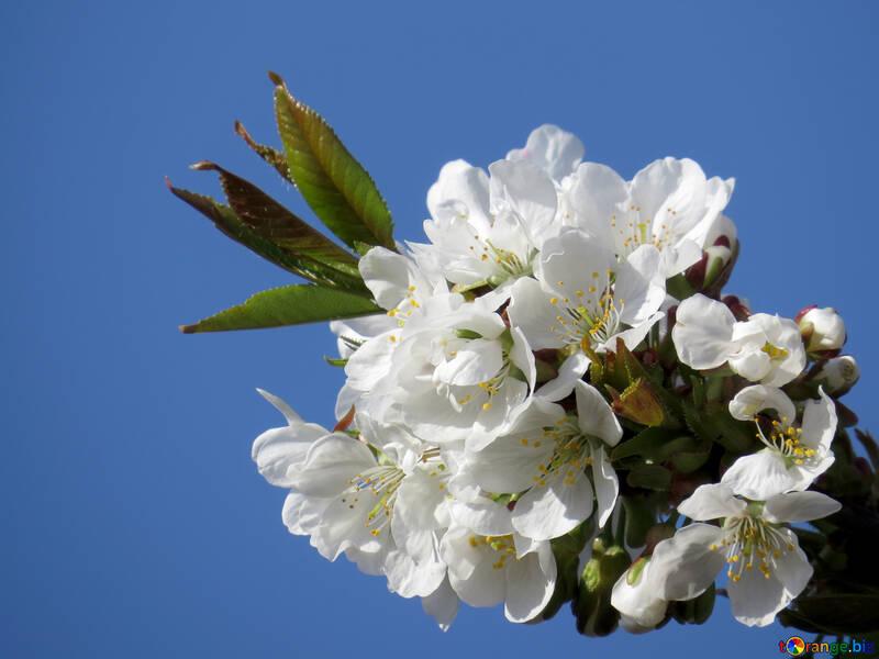 Ранняя весна №24408
