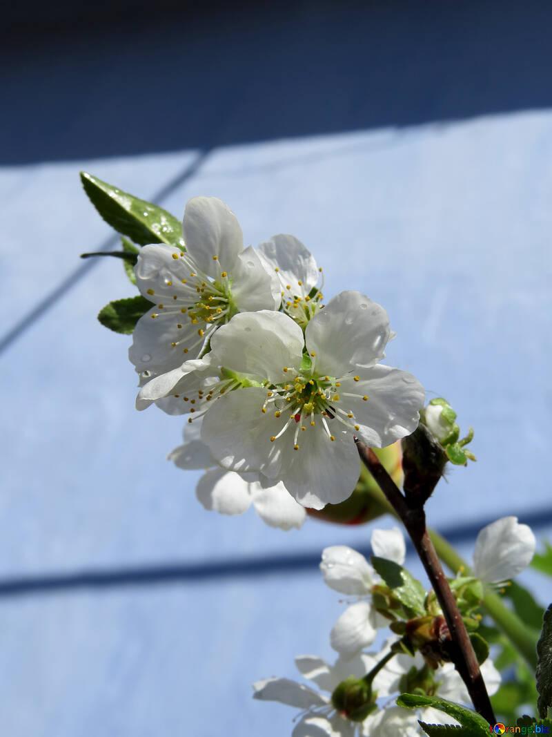 Фруктовый цветок №24031