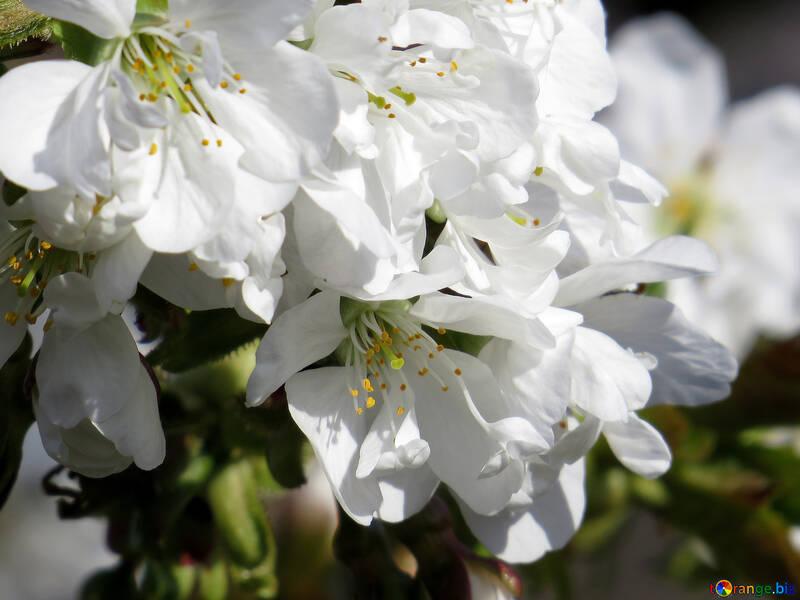 Макро белый цветок №24491