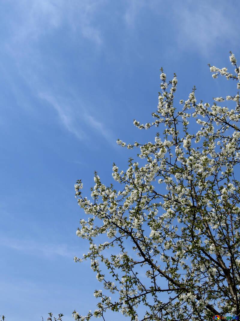 Frühling №24140