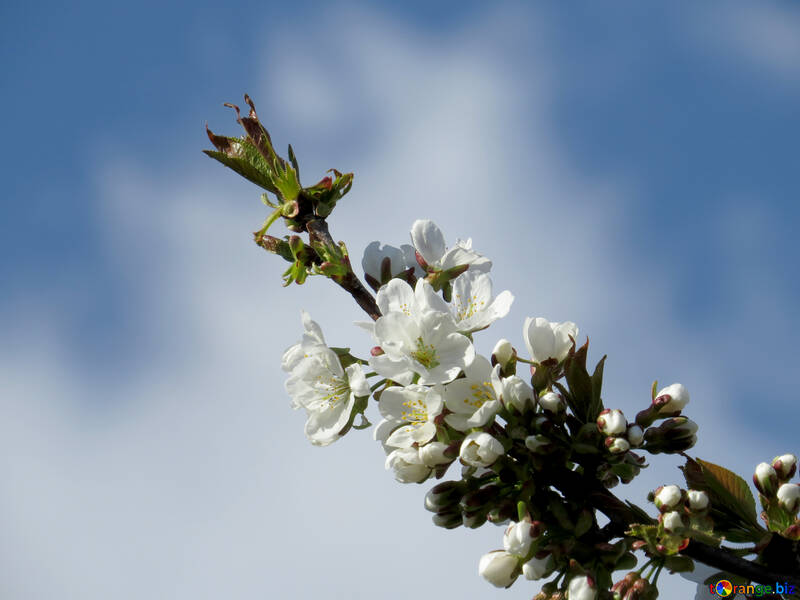 Frühling-desktop №24425