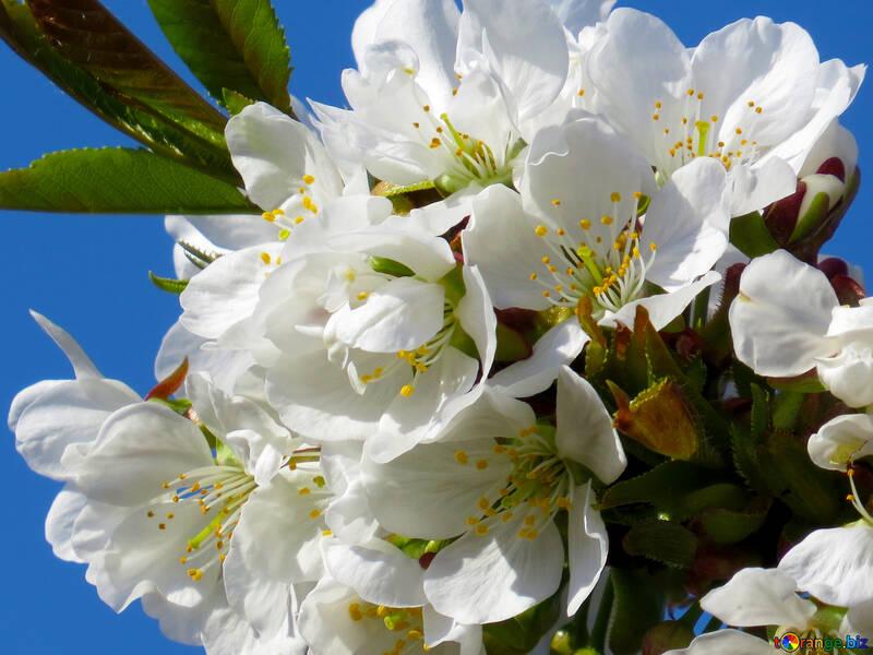 Весенний цветок №24410