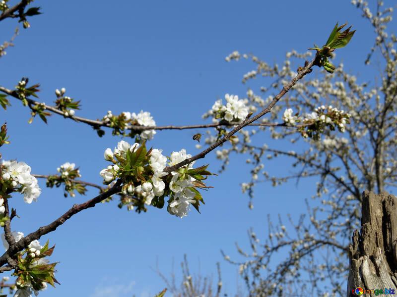 Весна в саду №24435