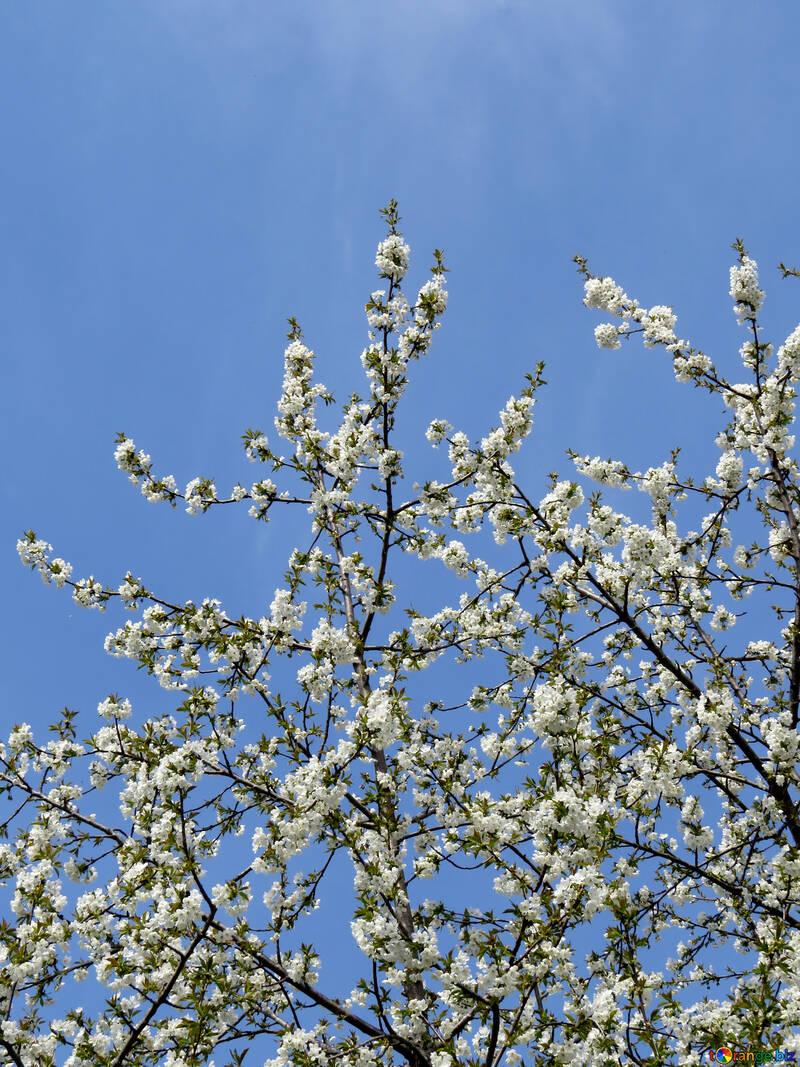 Frühling-Himmel №24141