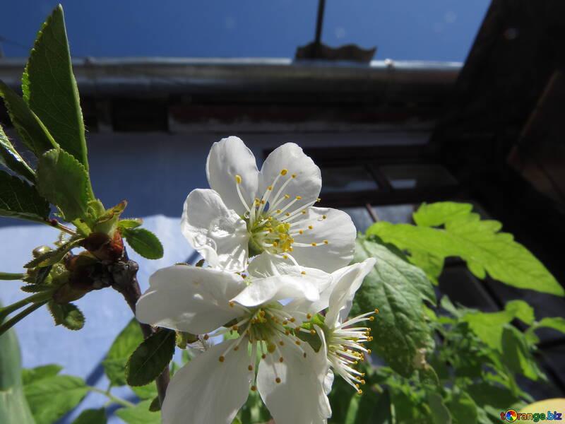 Весна в селе №24074