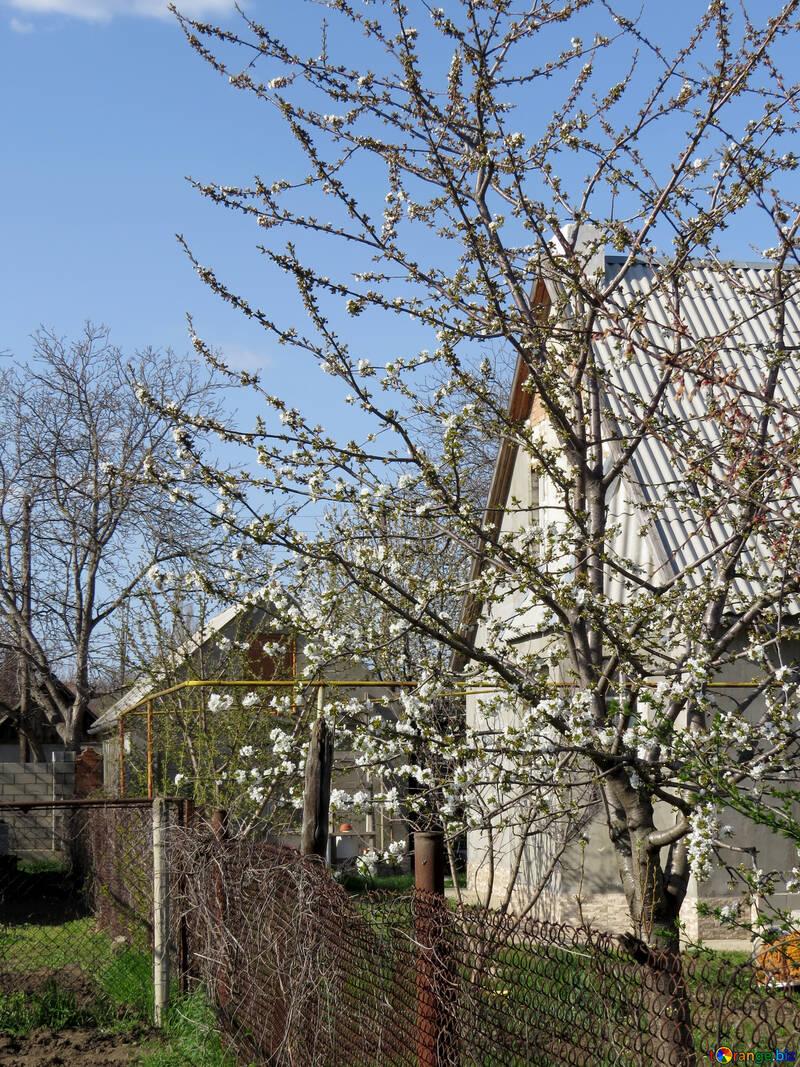 Село ранней весной №24509