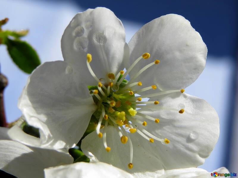 Белый цветок №24041