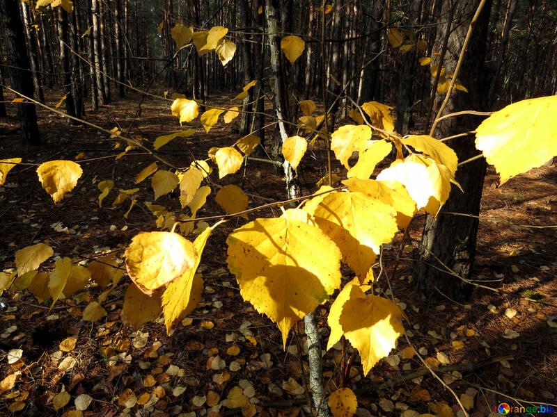 Forêt d`automne №24873