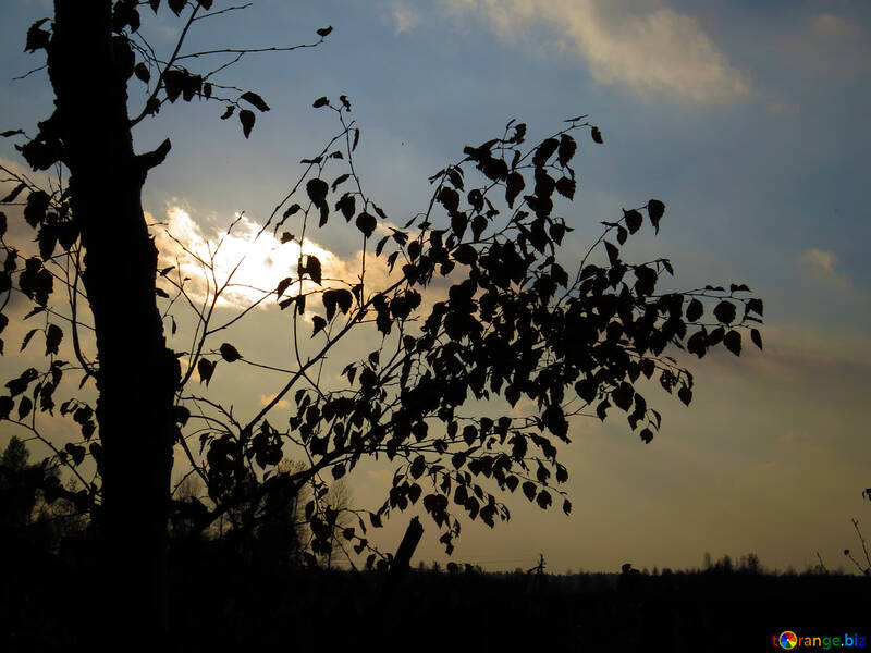 Puesta de sol de otoño №24802
