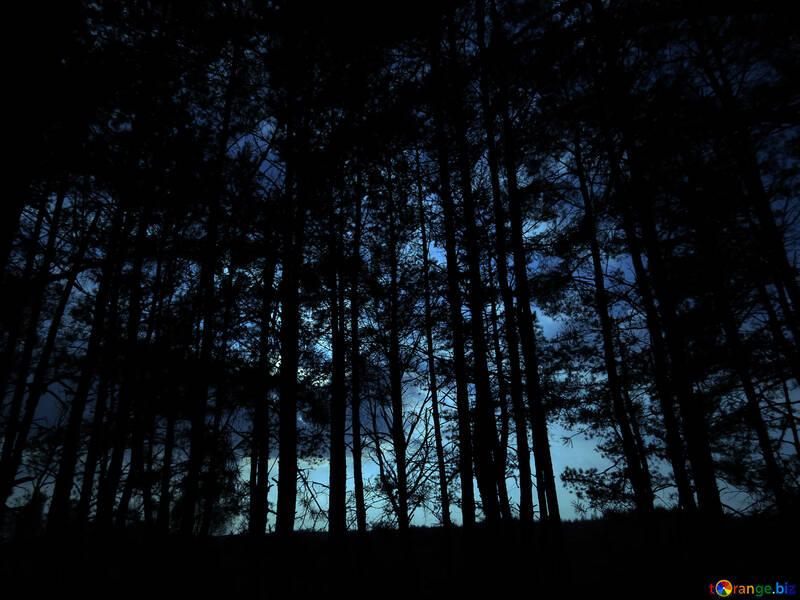 Dark forest №24809