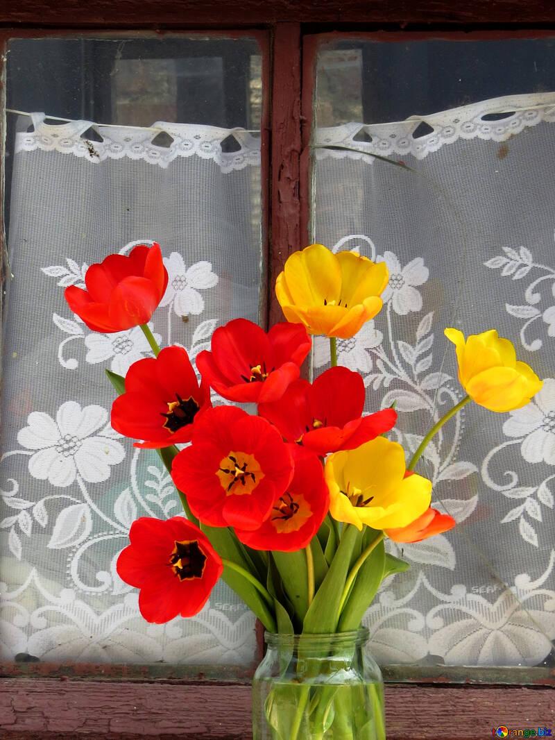 Tulips in the window №24156