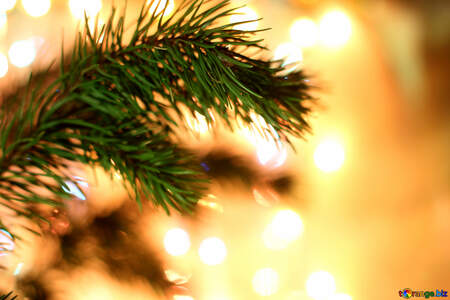 Background on the desktop Christmas tree branch №24593