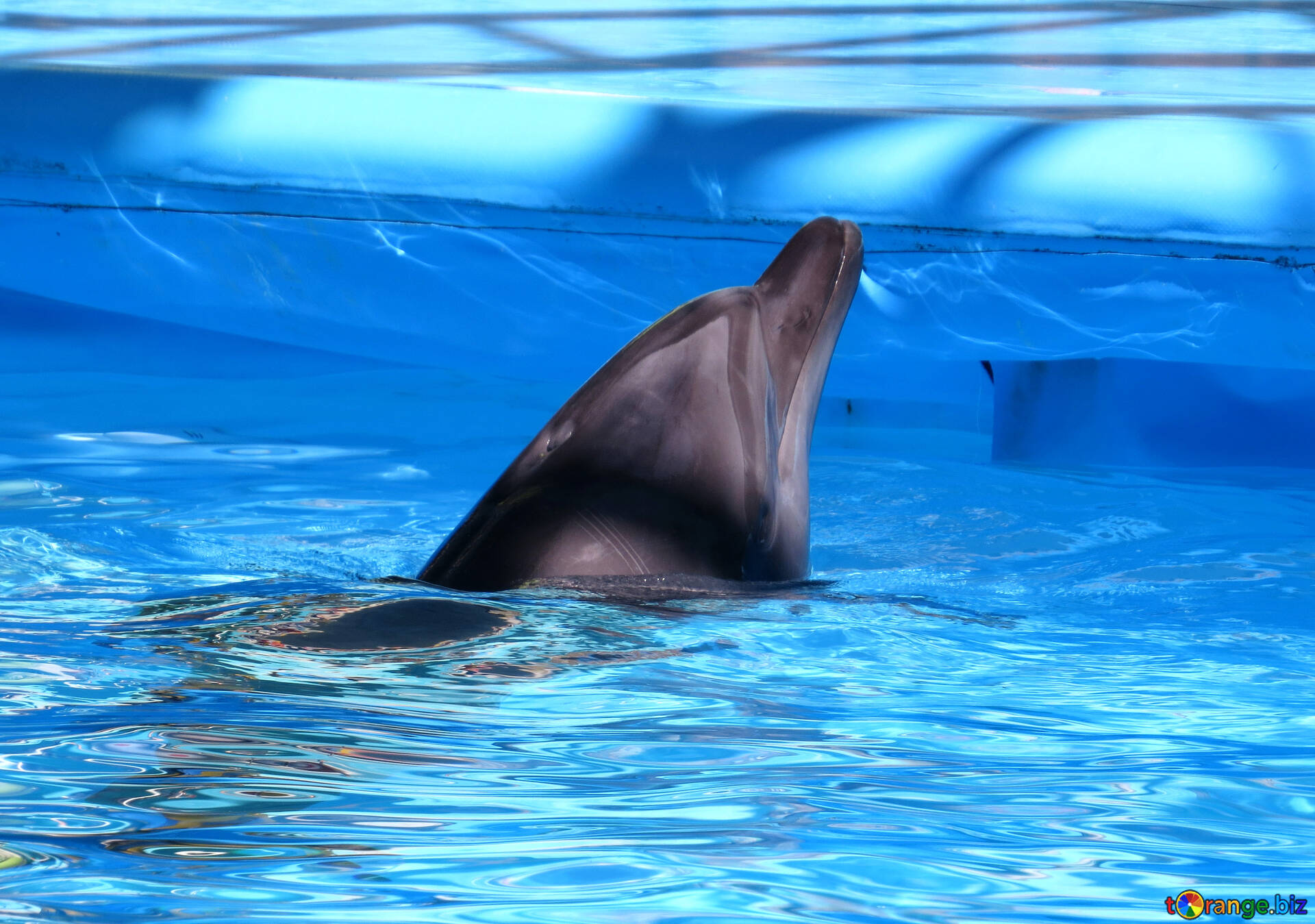 крупная картинка дельфина вас