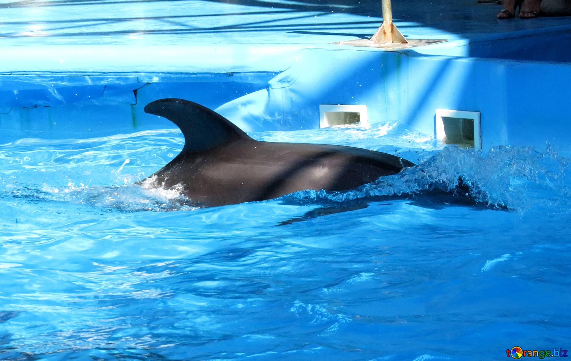 Фото вагина дельфина, Половые органы дельфинов: описание 22 фотография