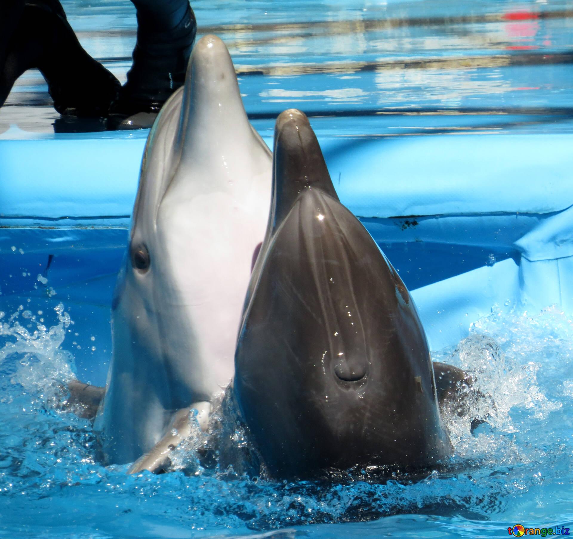 Дельфин играть бесплатно