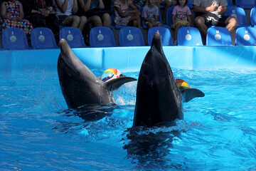 Dolphins with balls №25557
