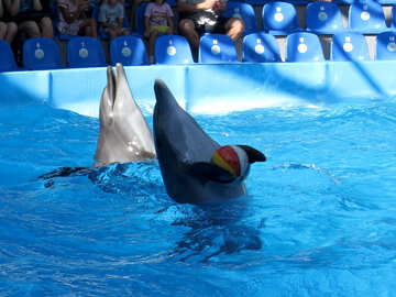 Dolphins have balls №25356