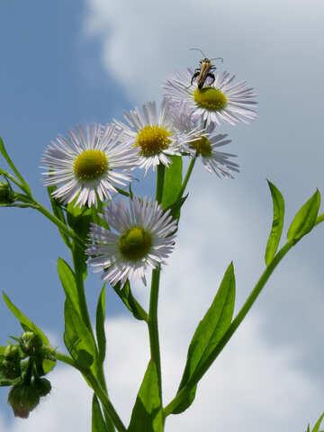 Fiore con scarabeo №25025