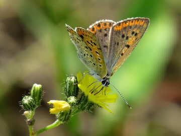 Food butterflies №25914