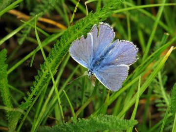 Butterfly beaten rain №25947
