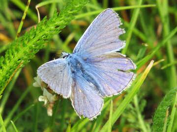 Sky-blue butterfly №25944