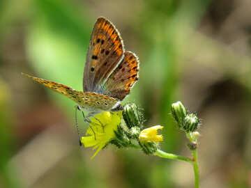 Butterfly wings №25912