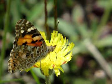 Butterfly №25932