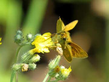 Beautiful butterfly on flower №25049