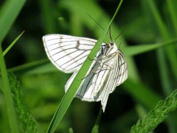 Butterfly on grass №25939