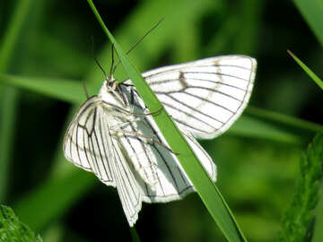 White butterfly №25940