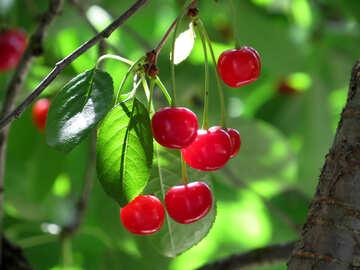 Ripe cherry №25954