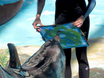 Dolphin artist №25321