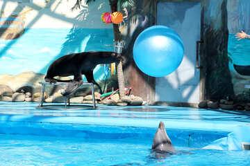 Circus with marine animals №25227