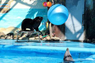 Circus with marine animals №25228